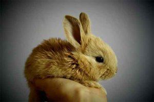 ウサギとの距離感